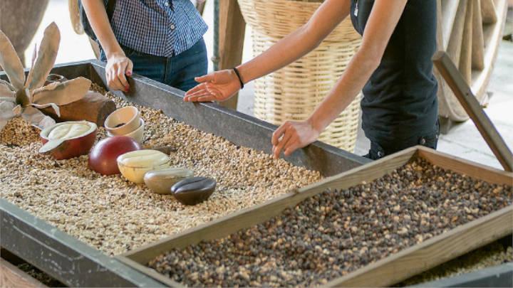 Una próspera industria cafetalera destaca al pueblo Coatepec